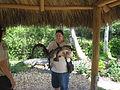 Everglades 2010.JPG
