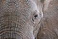 Eye of the elephant (Unsplash).jpg