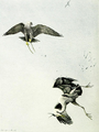 Falconry sport of kings (1920) Gerfalcon striking heron.png