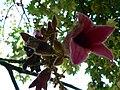 Fale - Giardini Botanici Hanbury in Ventimiglia - 576.jpg