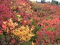Fall colors (310237571c8e429ba74e2cdf3c67db51).JPG
