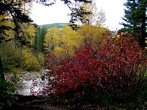 Tres Piedras, New Mexico - Fall colors in Carson National Forest near Tres Piedras
