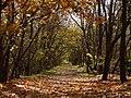 Farkas-erdő, Káposztásmegyer, 2008 Autum - panoramio (2).jpg