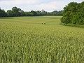Farmland, King's Somborne - geograph.org.uk - 455773.jpg