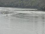 Ferry and wake on River Dart.jpg