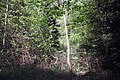 Feuchtgebiet Oberholz I 04.jpg