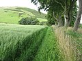 Field side footpath at Boghall - geograph.org.uk - 1418432.jpg