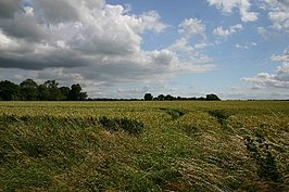 Fields at Windsor Green - geograph.org.uk - 199136.jpg