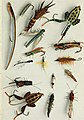 Fisherman's lures and game-fish food - with colored pictures from life of various creatures fish eat and new improved artificial imitation floating nature lures and chart-plans to show the haunts (14579308599).jpg