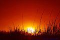 Flickr - law keven - Long Hot Summer.......jpg
