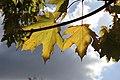 Flora della Sardegna 010 (11).jpg