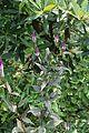 Flora of Kerala 8156.jpg