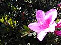 Floral beauty.jpg