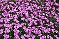 Flower 4125.jpg