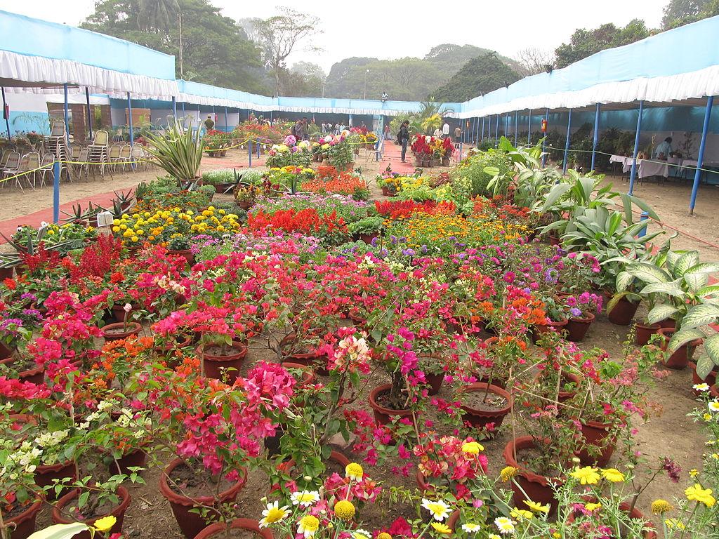 file flower show 2012 indian botanic garden howrah