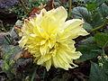 Flower at Ooty garden.jpg