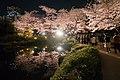 Flower viewing event in Tokyo, Japan; April 2014 (04).jpg
