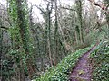 Footpath, Wannock Glen - geograph.org.uk - 1133826.jpg