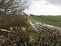 Footpath and Hedge - geograph.org.uk - 351798.jpg
