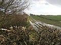 Footpath and Hedge - geograph.org.uk - 351798.jpg