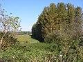 Footpath between Eastbridge and Minsmere - geograph.org.uk - 1733834.jpg