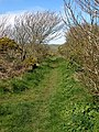 Footpath from Porthclais to St David's - geograph.org.uk - 779426.jpg