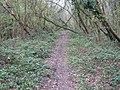 Footpath in Lords Wood - geograph.org.uk - 1245810.jpg