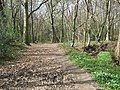 Footpath in early Spring - geograph.org.uk - 1360472.jpg