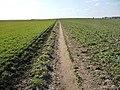Footpath to Rose Lane - geograph.org.uk - 1749089.jpg