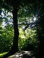 Forår i skoven 2.JPG