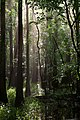 Forest2 (8225407770).jpg