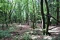 Forest @ Roc de Chère @ Talloires (34804351284).jpg