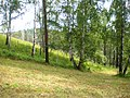 Forest - panoramio (6).jpg