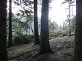 Forest in the vicinity of Raasepori castle (04-2007) - panoramio.jpg