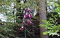 Foxglove feature, Sorn Woods, East Ayrshire.jpg