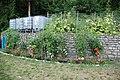 Freiland Tomaten1.jpg