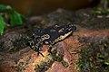 Froggy (17979746440).jpg