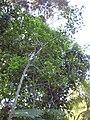 Gardenology.org-IMG 0688 rbgs10dec.jpg