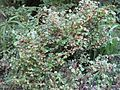Gardenology.org-IMG 1272 rbgs10dec.jpg