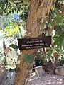 Gardenology.org-IMG 7431 qsbg11mar.jpg