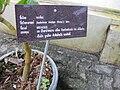 Gardenology.org-IMG 7817 qsbg11mar.jpg