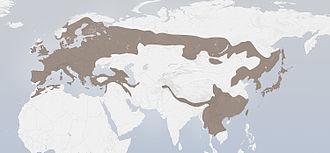 Eurasian jay - Image: Garrulus glandarius distribution