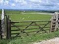 Gateway and sheep pasture - geograph.org.uk - 862312.jpg