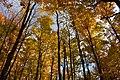 Gatineau Park, October 2018 (36) (31456319738).jpg