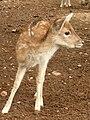 Gaziantep Zoo 1260140.jpg