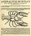 Gessner Astacus fluviatilis.jpg