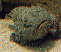 Gfp-gulf-flounder.jpg