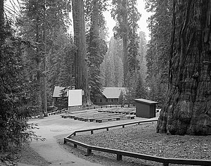 Giant Forest Lodge Historic District - Giant Forest Amphitheater, showing proximity to giant sequoias