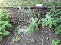 Giardino botanico di Brera (Milan 15.jpg