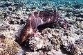 Gigantische Muräne im Roten Meer..DSCF3622BE.jpg